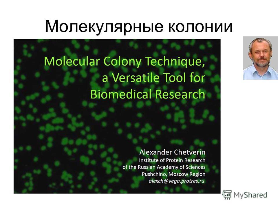 Молекулярные колонии