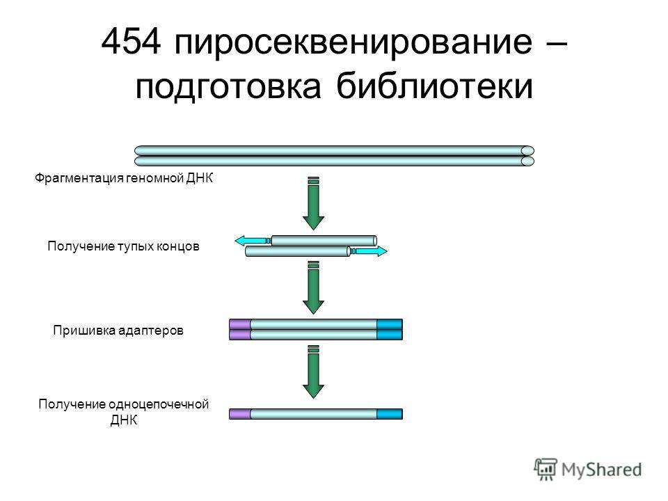 454 пиросеквенирование – подготовка библиотеки Фрагментация геномной ДНК Получение тупых концов Пришивка адаптеров Получение одноцепочечной ДНК