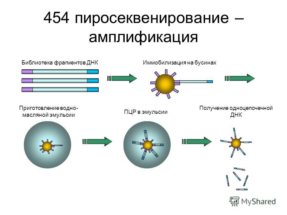 454 пиросеквенирование – амплификация Библиотека фрагментов ДНКИммобилизация на бусинах Приготовление водно- масляной эмульсии ПЦР в эмульсии Получение одноцепочечной ДНК