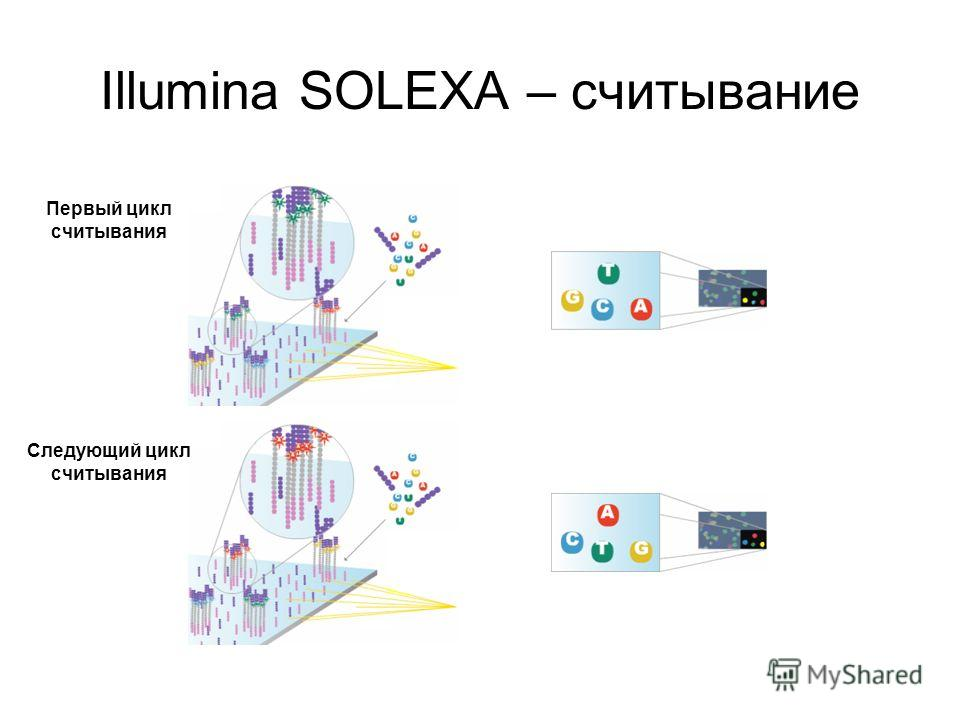 Illumina SOLEXA – считывание Первый цикл считывания Следующий цикл считывания