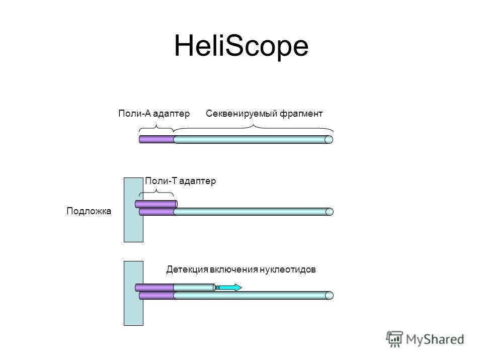 HeliScope Поли-А адаптерСеквенируемый фрагмент Поли-Т адаптер Детекция включения нуклеотидов Подложка
