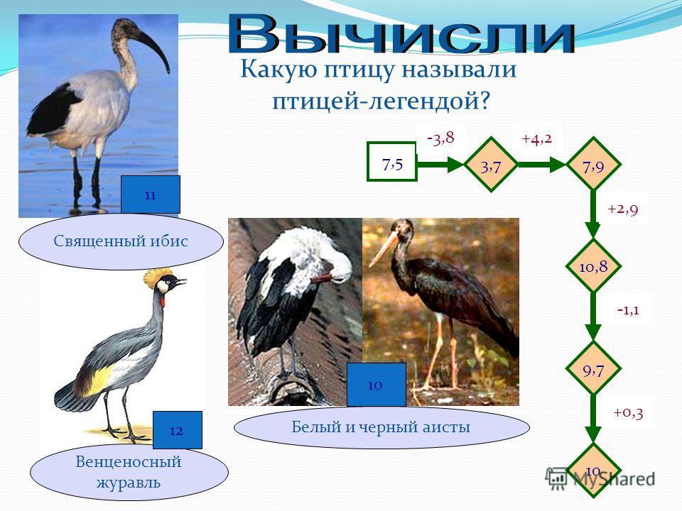 Какую птицу называли птицей-легендой? Венценосный журавль 7,5 -3,8+4,2 -1,1 +2,9 +0,3 9,7 10,8 7,93,7 10 12 Священный ибис 11 Белый и черный аисты 10