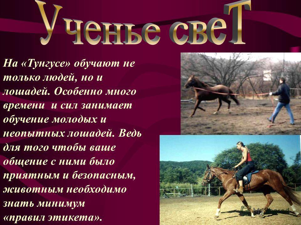 На «Тунгусе» обучают не только людей, но и лошадей. Особенно много времени и сил занимает обучение молодых и неопытных лошадей. Ведь для того чтобы ваше общение с ними было приятным и безопасным, животным необходимо знать минимум «правил этикета».