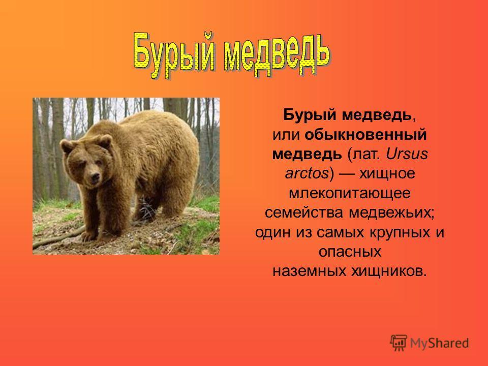 Бурый медведь, или обыкновенный медведь (лат. Ursus arctos) хищное млекопитающее семейства медвежьих; один из самых крупных и опасных наземных хищников.