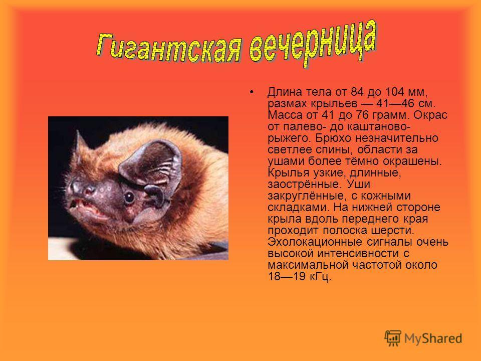 Длина тела от 84 до 104 мм, размах крыльев 4146 см. Масса от 41 до 76 грамм. Окрас от палево- до каштаново- рыжего. Брюхо незначительно светлее спины, области за ушами более тёмно окрашены. Крылья узкие, длинные, заострённые. Уши закруглённые, с кожн
