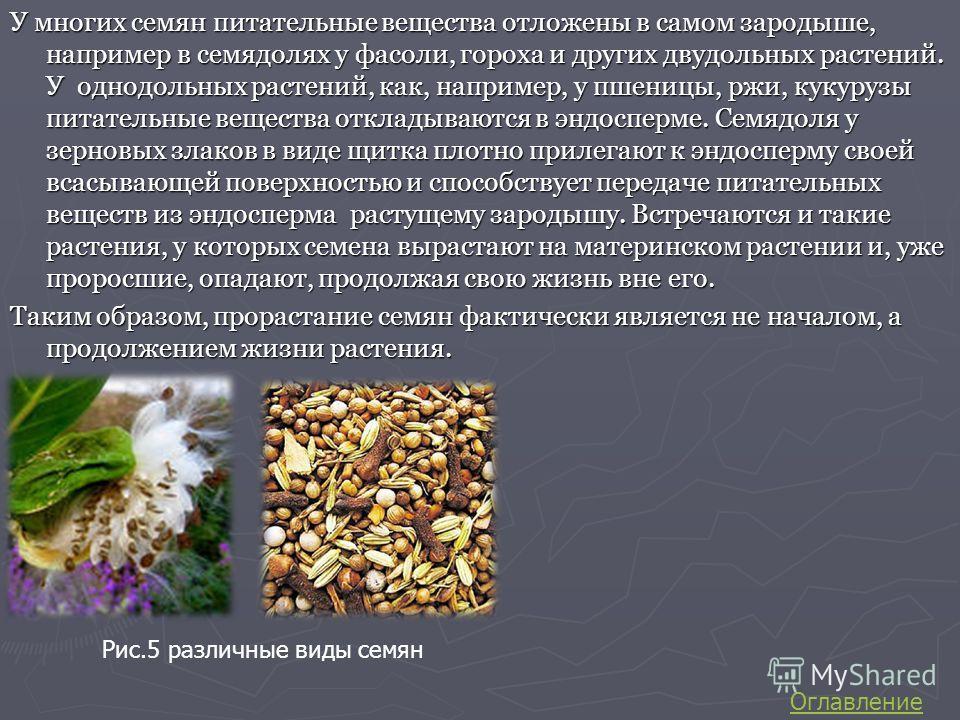 У многих семян питательные вещества отложены в самом зародыше, например в семядолях у фасоли, гороха и других двудольных растений. У однодольных растений, как, например, у пшеницы, ржи, кукурузы питательные вещества откладываются в эндосперме. Семядо