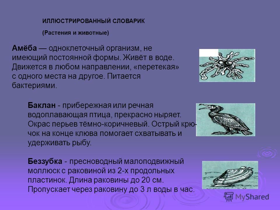ИЛЛЮСТРИРОВАННЫЙ СЛОВАРИК (Растения и животные) Амёба одноклеточный организм, не имеющий постоянной формы. Живёт в воде. Движется в любом направлении, «перетекая» с одного места на другое. Питается бактериями. Баклан - прибережная или речная водопл