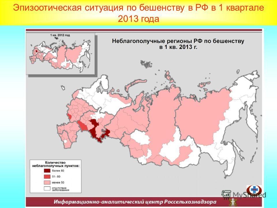 Эпизоотическая ситуация по бешенству в РФ в 1 квартале 2013 года