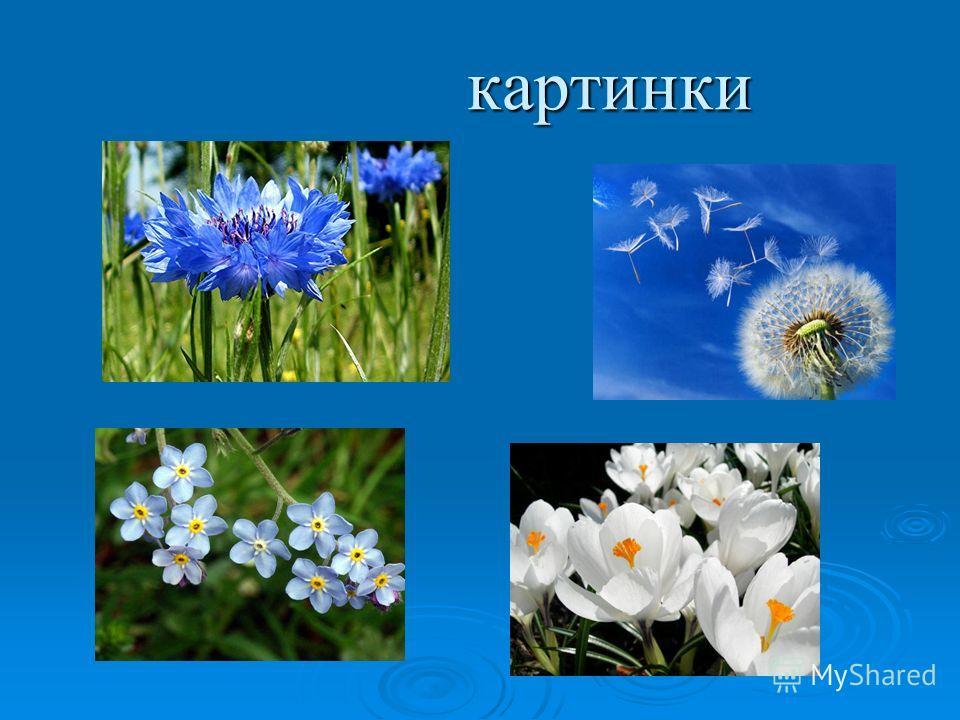 картинки картинки