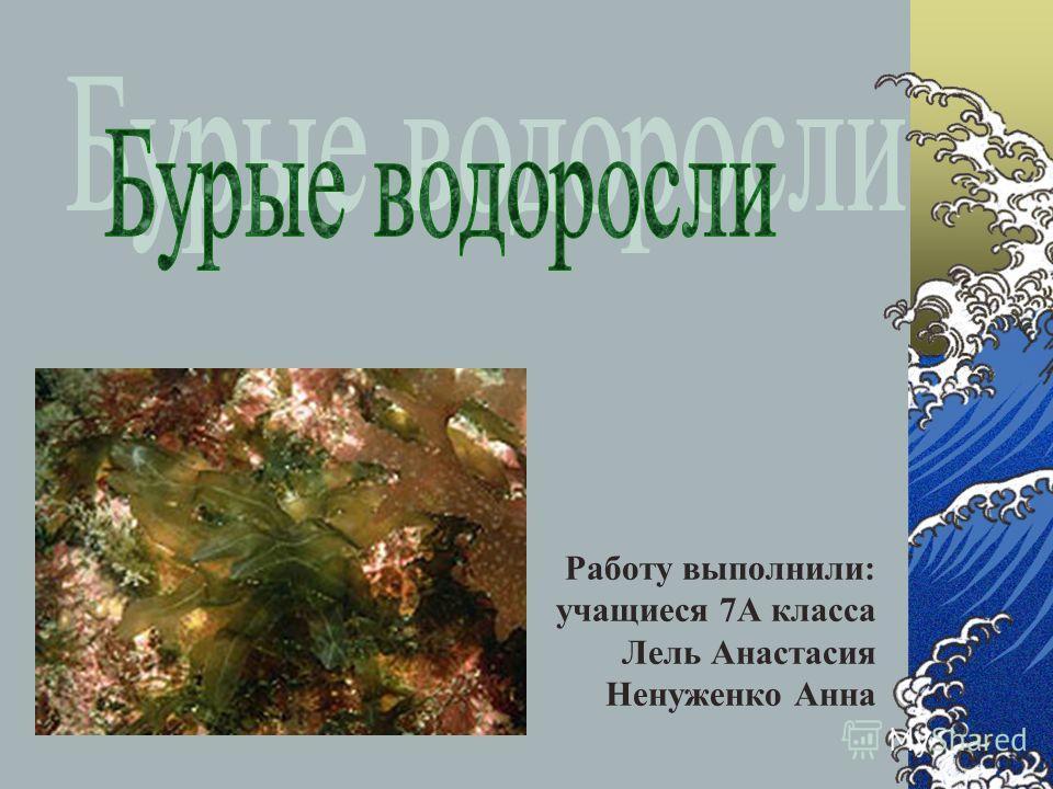 Работу выполнили: учащиеся 7А класса Лель Анастасия Ненуженко Анна