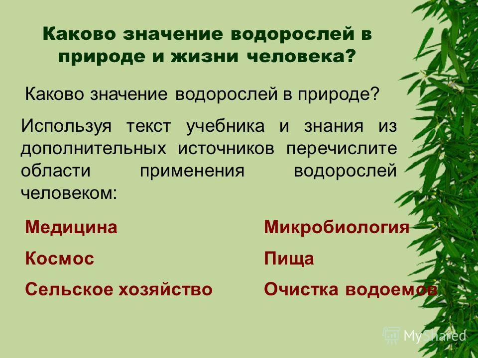 Значение водорослей в природе и жизни