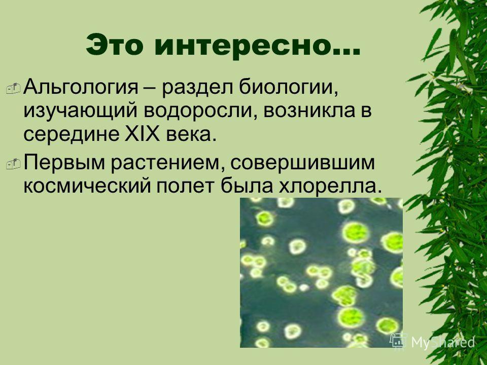 Это интересно… Альгология – раздел биологии, изучающий водоросли, возникла в середине XIX века. Первым растением, совершившим космический полет была хлорелла.