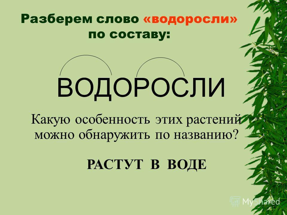Разберем слово «водоросли» по составу: ВОДОРОСЛИ Какую особенность этих растений можно обнаружить по названию? РАСТУТ В ВОДЕ