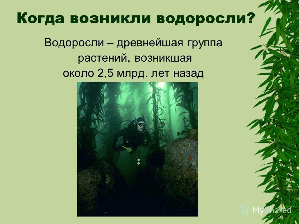 Когда возникли водоросли? Водоросли – древнейшая группа растений, возникшая около 2,5 млрд. лет назад