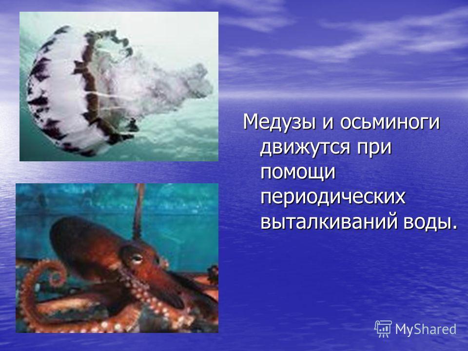 Медузы и осьминоги движутся при помощи периодических выталкиваний воды.