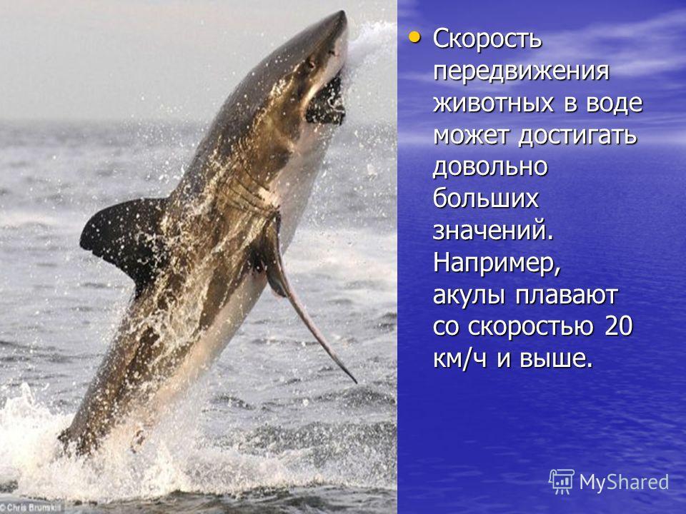 Скорость передвижения животных в воде может достигать довольно больших значений. Например, акулы плавают со скоростью 20 км/ч и выше. Скорость передвижения животных в воде может достигать довольно больших значений. Например, акулы плавают со скорость