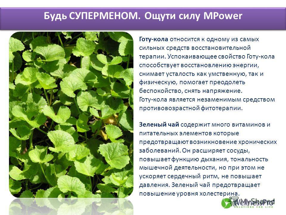 Будь СУПЕРМЕНОМ. Ощути силу MPower Зеленый чай содержит много витаминов и питательных элементов которые предотвращают возникновение хронических заболеваний. Он расширяет сосуды, повышает функцию дыхания, тональность мышечной деятельности, но при этом