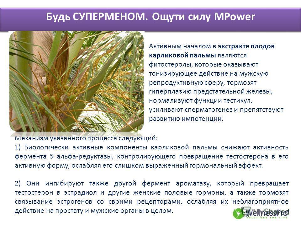 Будь СУПЕРМЕНОМ. Ощути силу MPower Активным началом в экстракте плодов карликовой пальмы являются фитостеролы, которые оказывают тонизирующее действие на мужскую репродуктивную сферу, тормозят гиперплазию предстательной железы, нормализуют функции те