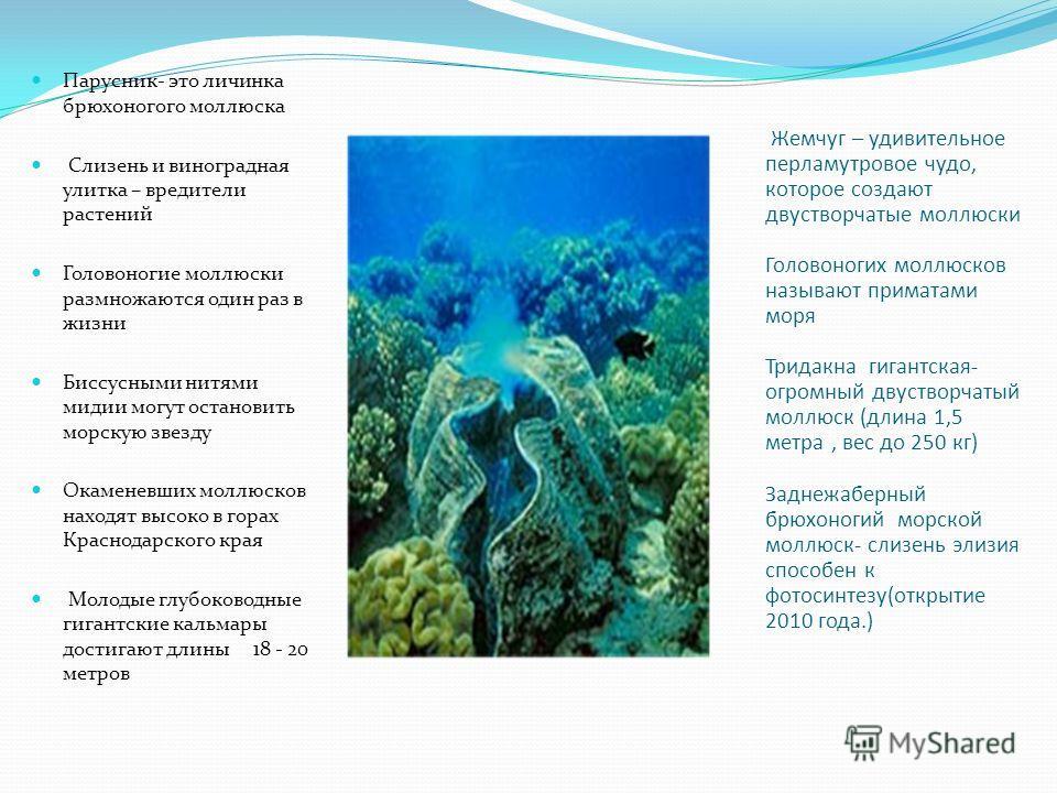 Жемчуг – удивительное перламутровое чудо, которое создают двустворчатые моллюски Головоногих моллюсков называют приматами моря Тридакна гигантская- огромный двустворчатый моллюск (длина 1,5 метра, вес до 250 кг) Заднежаберный брюхоногий морской моллю