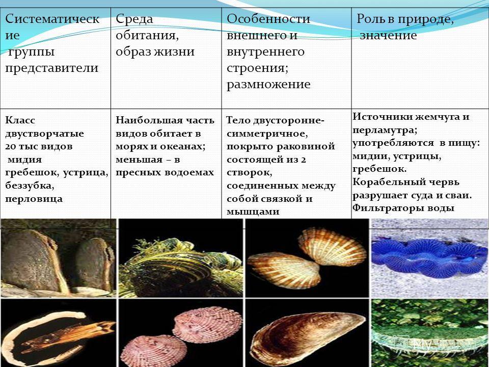 Систематическ ие группы представители Среда обитания, образ жизни Особенности внешнего и внутреннего строения; размножение Роль в природе, значение Класс двустворчатые 20 тыс видов мидия гребешок, устрица, беззубка, перловица Наибольшая часть видов о