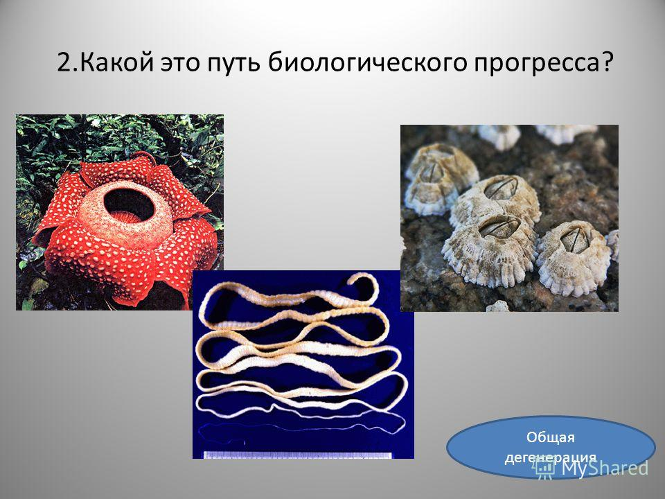 2.Какой это путь биологического прогресса? Общая дегенерация