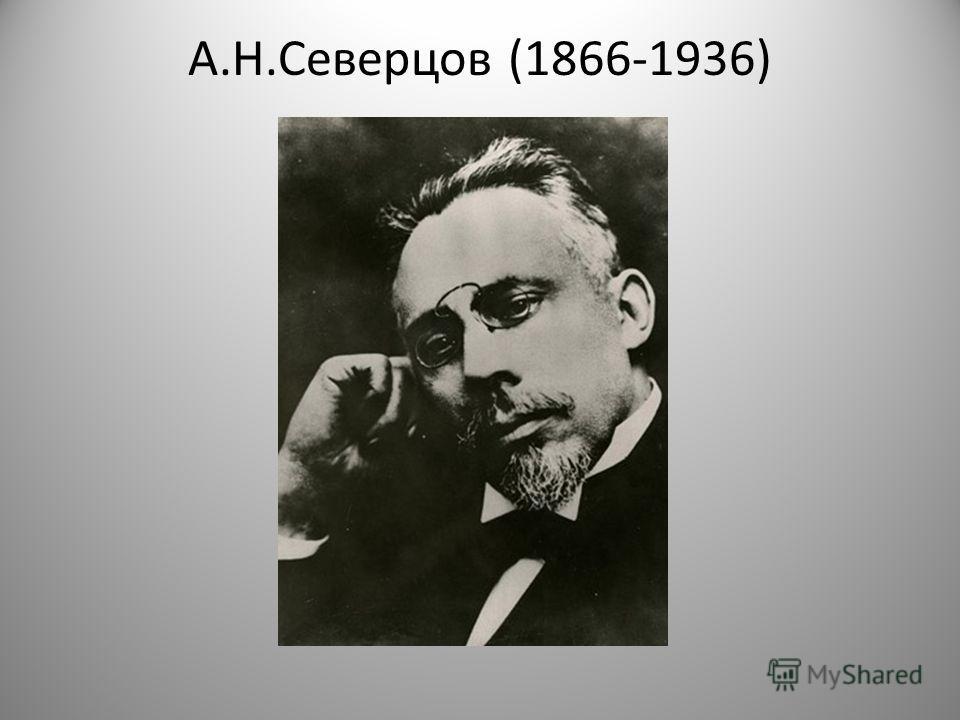 А.Н.Северцов (1866-1936)