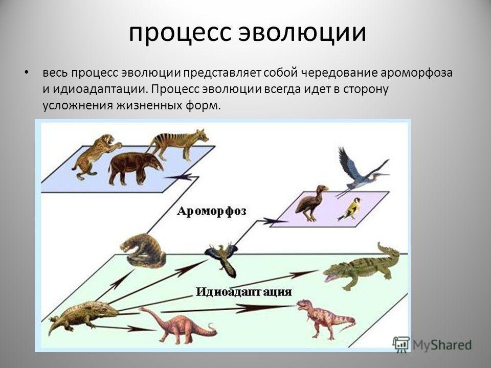 процесс эволюции весь процесс эволюции представляет собой чередование ароморфоза и идиоадаптации. Процесс эволюции всегда идет в сторону усложнения жизненных форм.