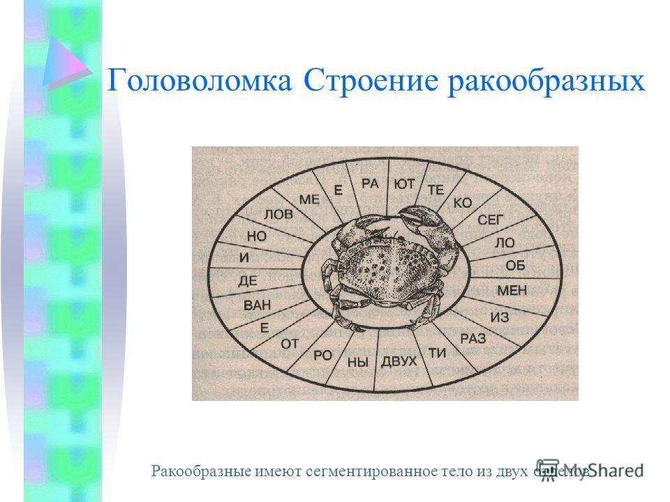 Классификация Подтип ЖабродышащиеХелицеродышащиеТрахейные Класс РакообразныеПаукообразныеНасекомые Предста- вители Тип Членистоногие
