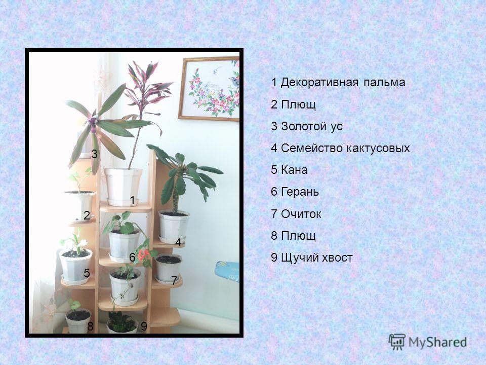 1 2 3 4 5 6 7 89 1 Декоративная пальма 2 Плющ 3 Золотой ус 4 Семейство кактусовых 5 Кана 6 Герань 7 Очиток 8 Плющ 9 Щучий хвост