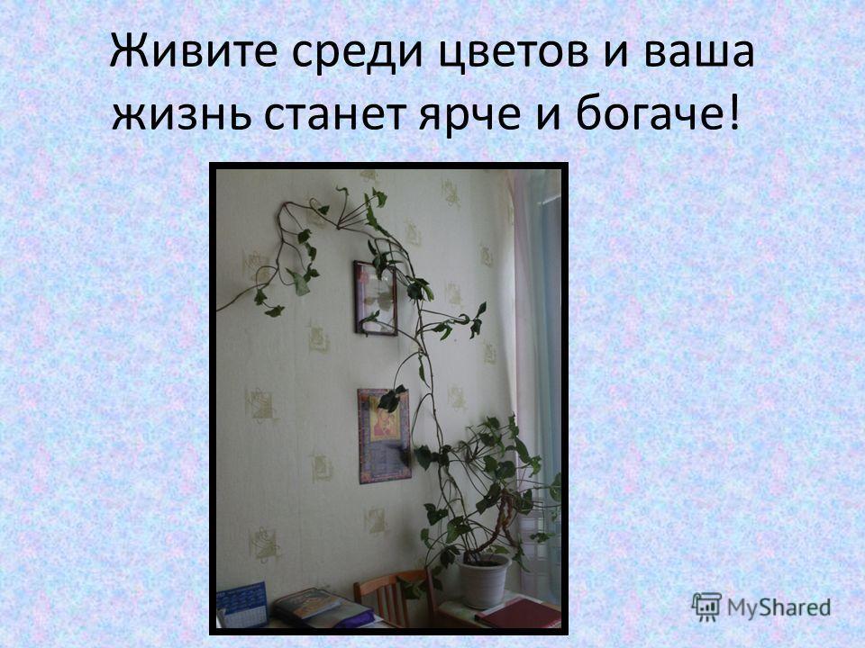 Живите среди цветов и ваша жизнь станет ярче и богаче!