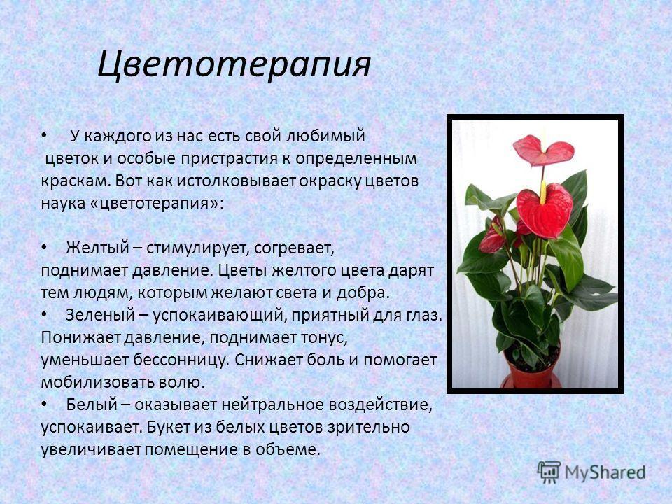 Цветотерапия У каждого из нас есть свой любимый цветок и особые пристрастия к определенным краскам. Вот как истолковывает окраску цветов наука «цветотерапия»: Желтый – стимулирует, согревает, поднимает давление. Цветы желтого цвета дарят тем людям, к