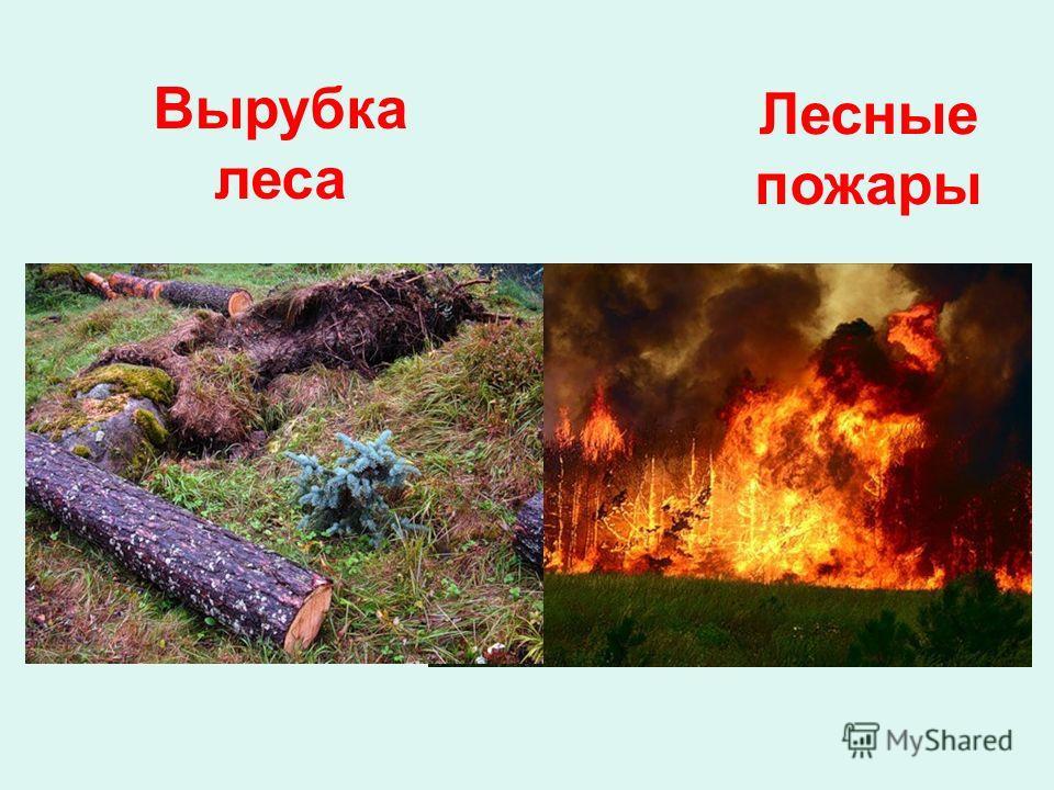 Вырубка леса Лесные пожары
