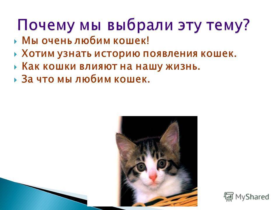 Мы очень любим кошек! Хотим узнать историю появления кошек. Как кошки влияют на нашу жизнь. За что мы любим кошек.