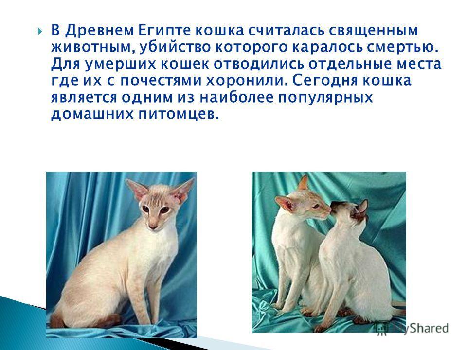 В Древнем Египте кошка считалась священным животным, убийство которого каралось смертью. Для умерших кошек отводились отдельные места где их с почестями хоронили. Сегодня кошка является одним из наиболее популярных домашних питомцев.