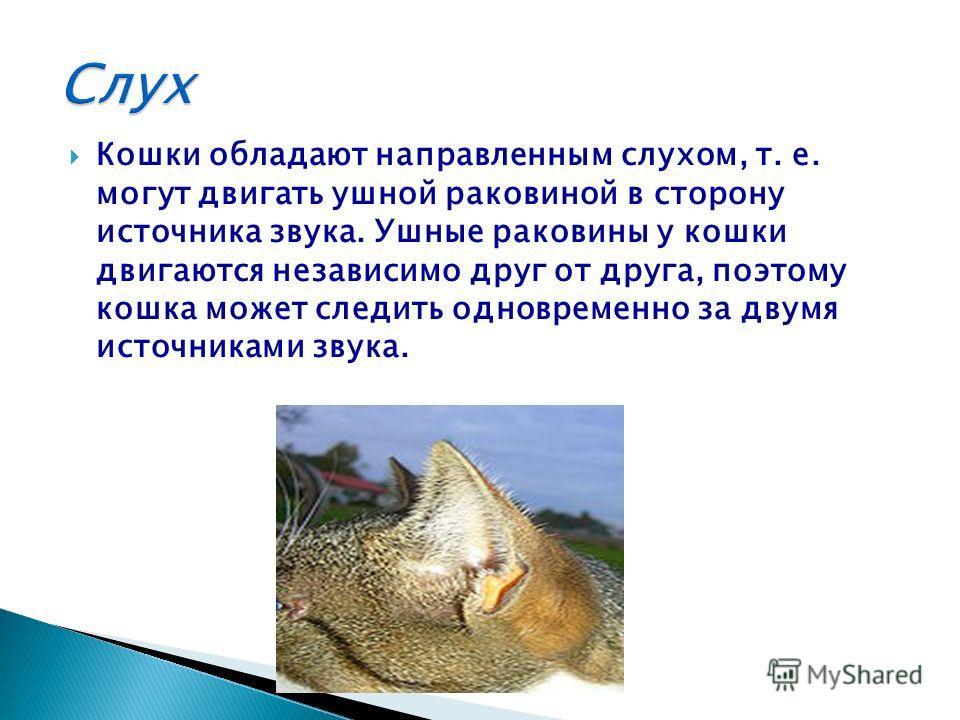 Кошки обладают направленным слухом, т. е. могут двигать ушной раковиной в сторону источника звука. Ушные раковины у кошки двигаются независимо друг от друга, поэтому кошка может следить одновременно за двумя источниками звука.