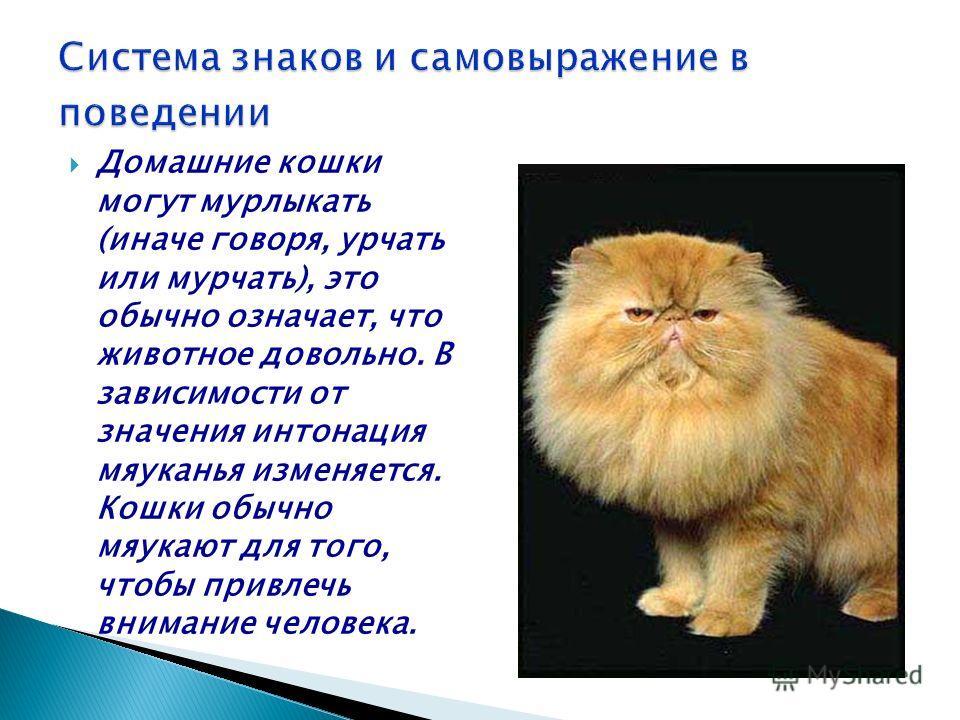 Домашние кошки могут мурлыкать (иначе говоря, урчать или мурчать), это обычно означает, что животное довольно. В зависимости от значения интонация мяуканья изменяется. Кошки обычно мяукают для того, чтобы привлечь внимание человека.