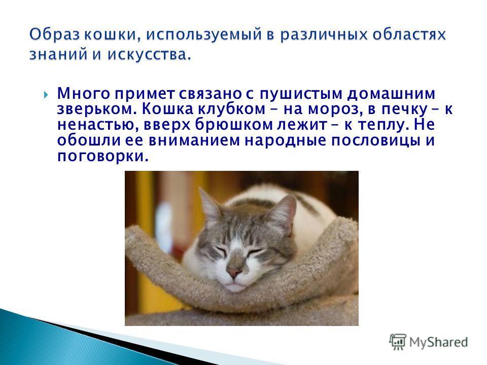 Много примет связано с пушистым домашним зверьком. Кошка клубком – на мороз, в печку – к ненастью, вверх брюшком лежит – к теплу. Не обошли ее вниманием народные пословицы и поговорки.