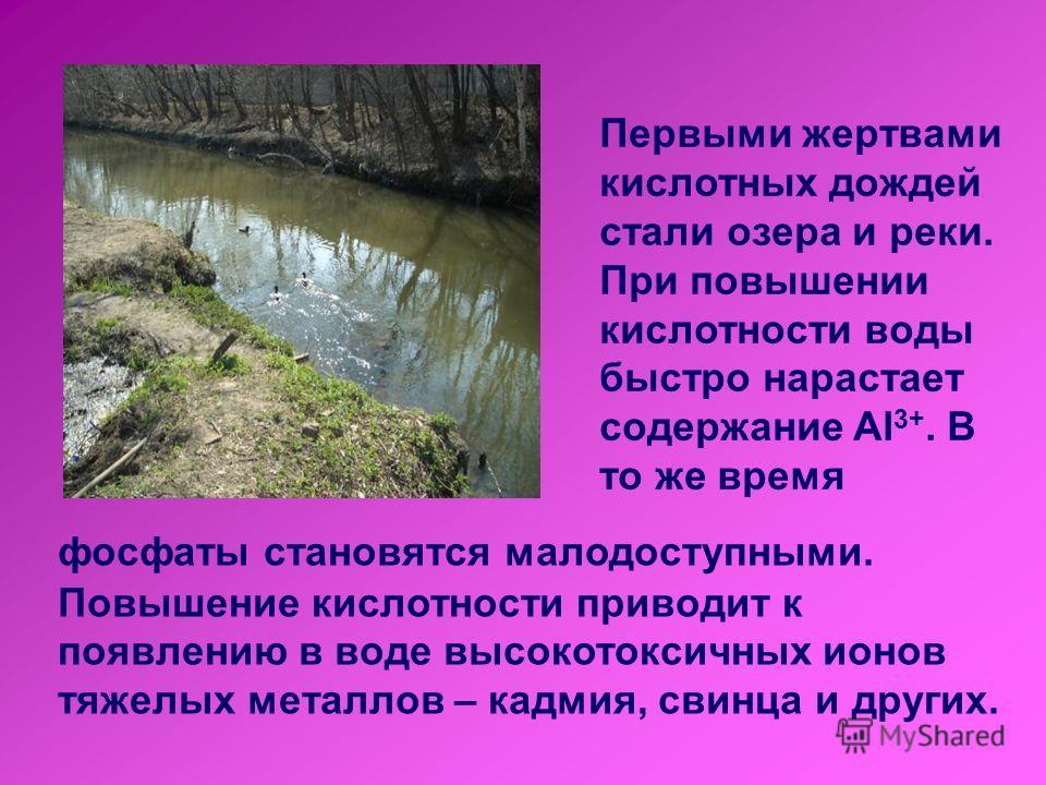 Первыми жертвами кислотных дождей стали озера и реки. При повышении кислотности воды быстро нарастает содержание Al 3+. В то же время фосфаты становятся малодоступными. Повышение кислотности приводит к появлению в воде высокотоксичных ионов тяжелых м