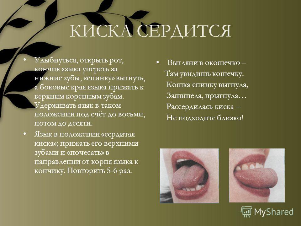 КИСКА СЕРДИТСЯ Улыбнуться, открыть рот, кончик языка упереть за нижние зубы, «спинку» выгнуть, а боковые края языка прижать к верхним коренным зубам. Удерживать язык в таком положении под счёт до восьми, потом до десяти. Язык в положении «сердитая к