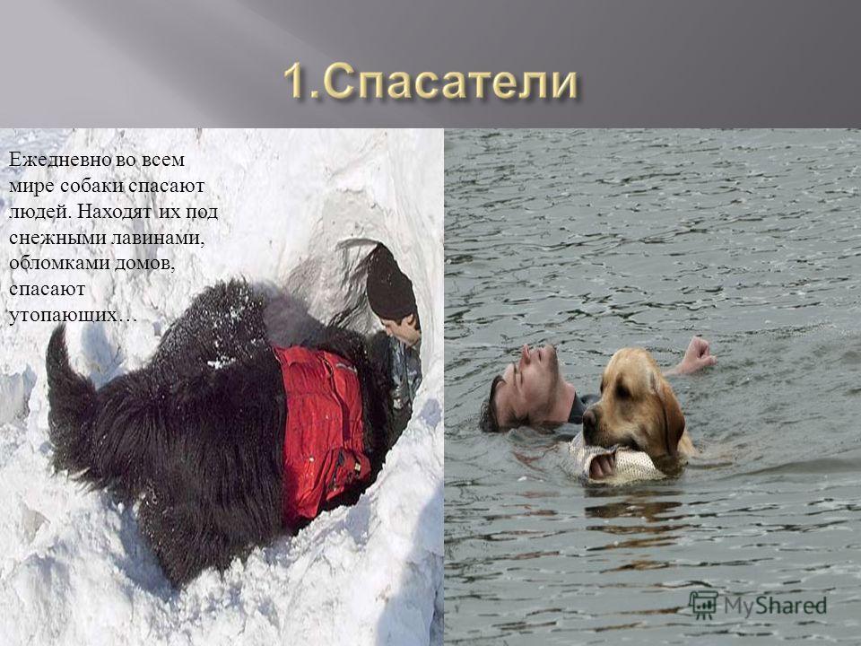 Ежедневно во всем мире собаки спасают людей. Находят их под снежными лавинами, обломками домов, спасают утопающих…