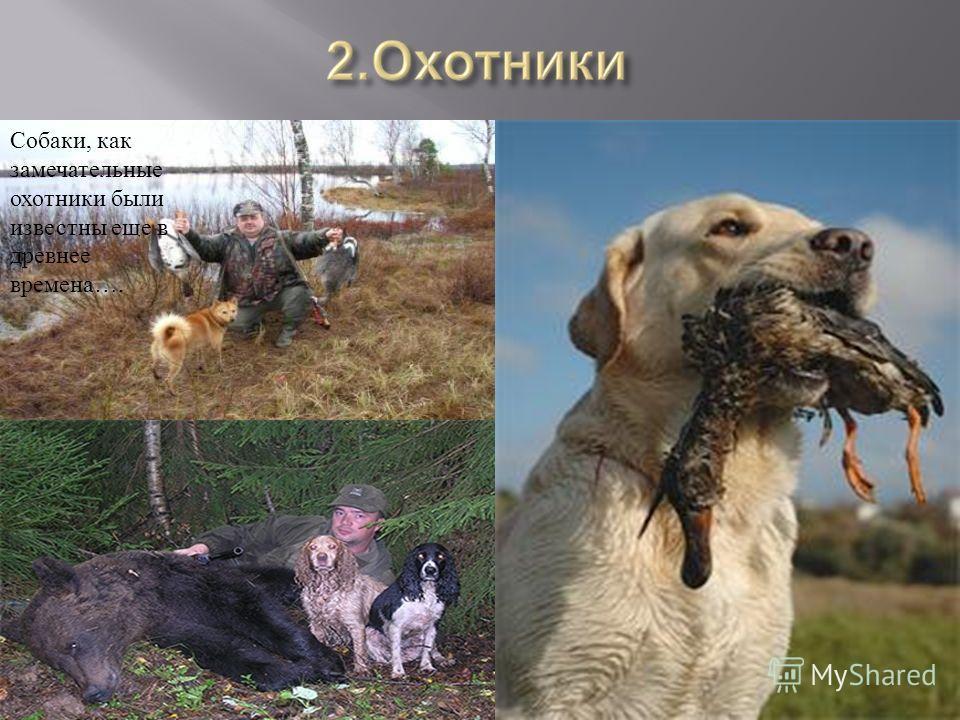 Собаки, как замечательные охотники были известны еще в древнее времена….