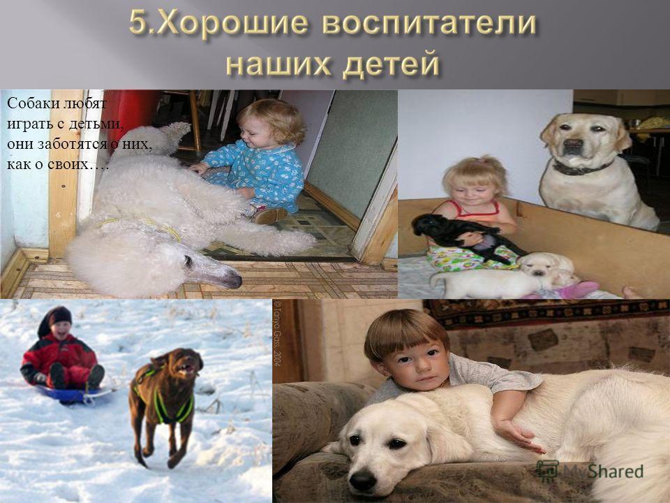 Собаки любят играть с детьми, они заботятся о них, как о своих….