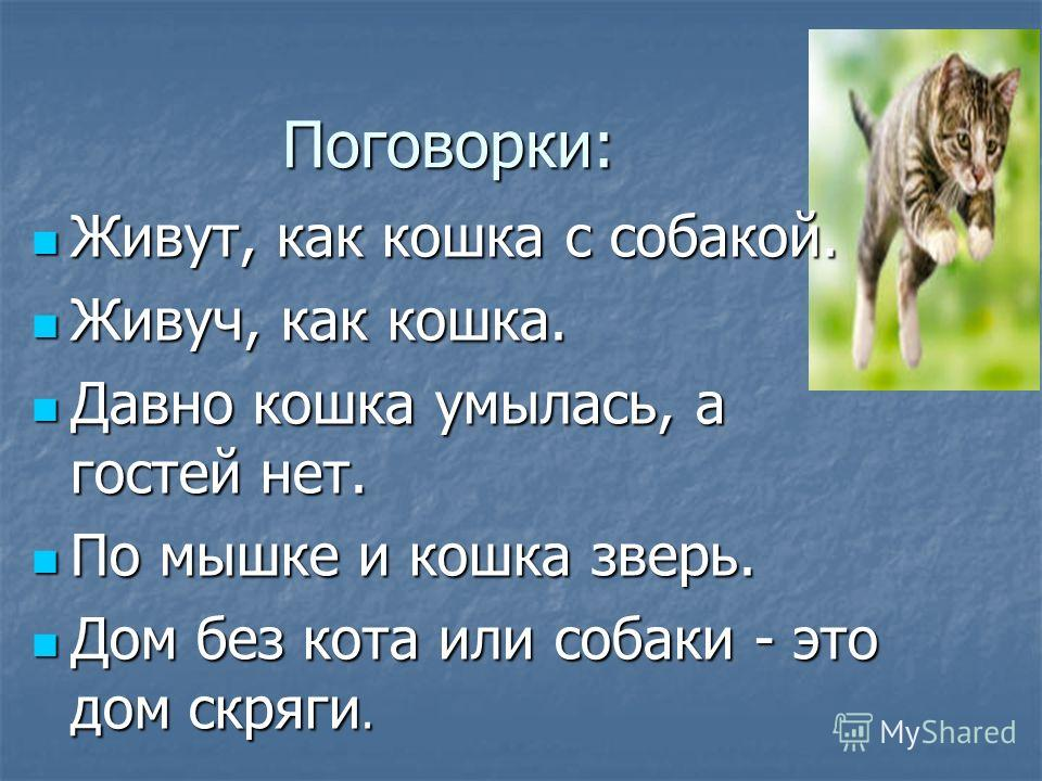 Поговорки: Живут, как кошка с собакой. Живут, как кошка с собакой. Живуч, как кошка. Живуч, как кошка. Давно кошка умылась, а гостей нет. Давно кошка умылась, а гостей нет. По мышке и кошка зверь. По мышке и кошка зверь. Дом без кота или собаки - это