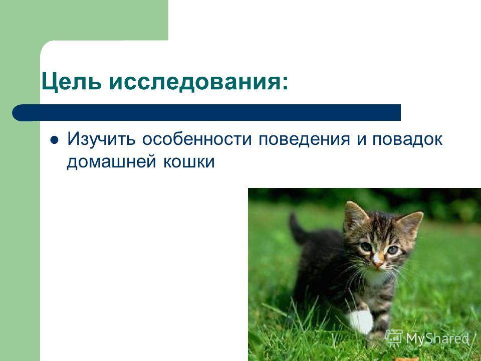 Цель исследования: Изучить особенности поведения и повадок домашней кошки