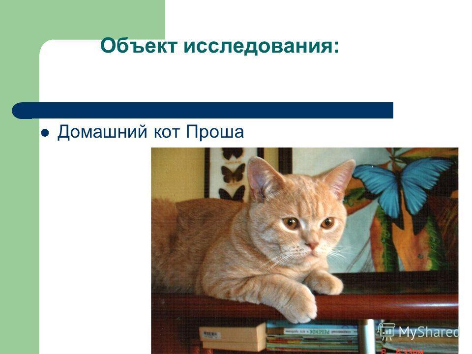 Объект исследования: Домашний кот Проша