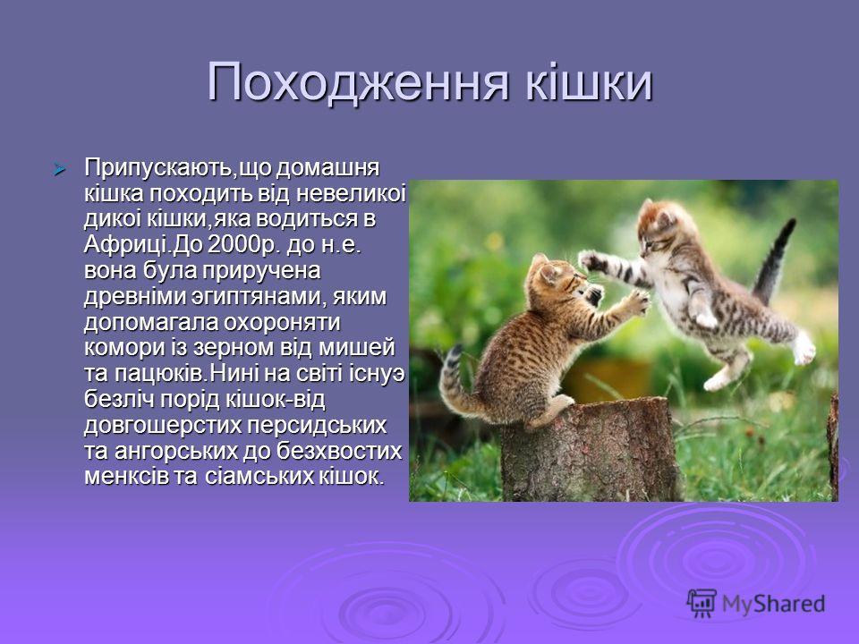 Походження кiшки Припускають,що домашня кiшка походить вiд невеликоi дикоi кiшки,яка водиться в Африцi.До 2000р. до н.е. вона була приручена древнiми эгиптянами, яким допомагала охороняти комори iз зерном вiд мишей та пацюкiв.Нинi на свiтi iснуэ безл