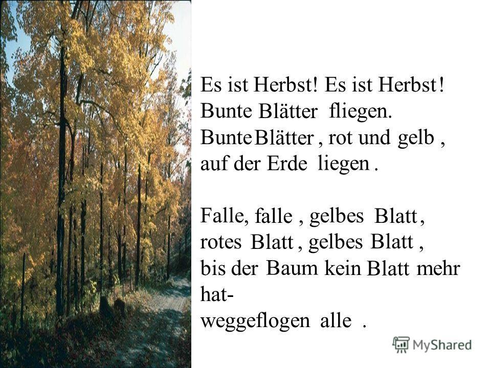 Es ist Herbst! Es ist ! Bunte fliegen. Bunte, rot und, auf der Erde. Falle,, gelbes, rotes, gelbes, bis der kein mehr hat- weggeflogen. Herbst Blätter gelb liegen falleBlatt Baum alle