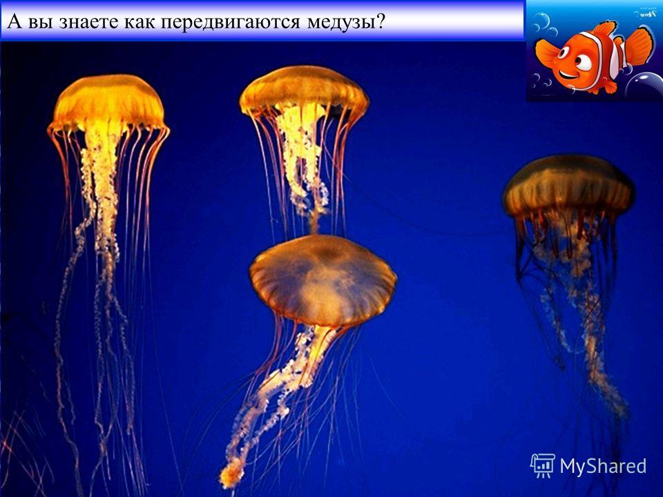 А вы знаете как передвигаются медузы?