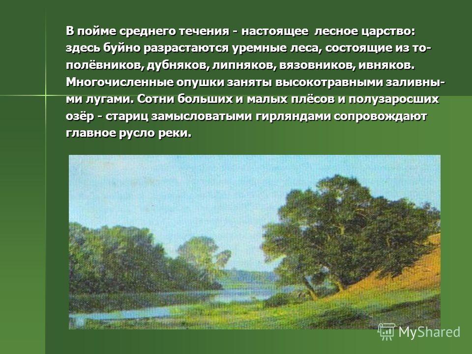 В пойме среднего течения - настоящее лесное царство: здесь буйно разрастаются уремные леса, состоящие из то- полёвников, дубняков, липняков, вязовников, ивняков. Многочисленные опушки заняты высокотравными заливны- ми лугами. Сотни больших и малых пл