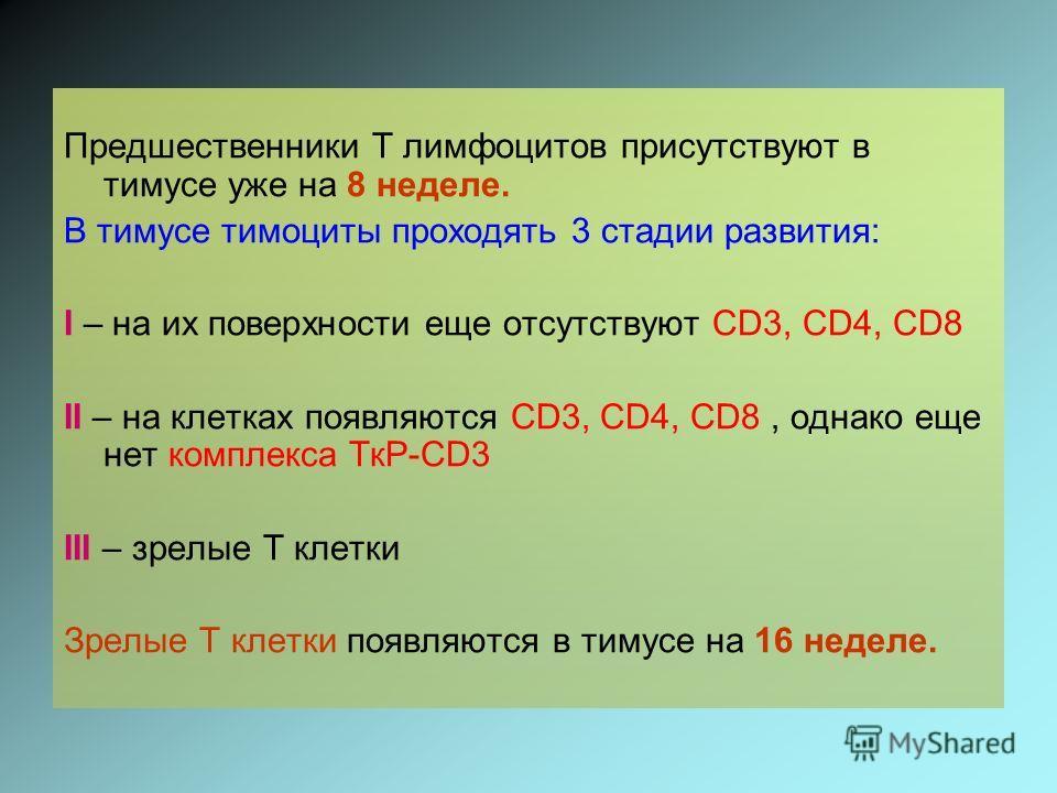 Предшественники Т лимфоцитов присутствуют в тимусе уже на 8 неделе. В тимусе тимоциты проходять 3 стадии развития: І – на их поверхности еще отсутствуют CD3, CD4, CD8 ІІ – на клетках появляются CD3, CD4, CD8, однако еще нет комплекса ТкР-CD3 ІІІ – зр